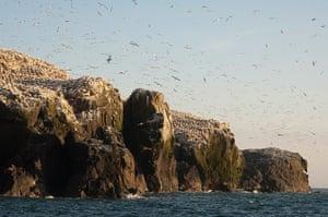 Wales wildlife: Grassholm Island, Pembrokeshire, Wales