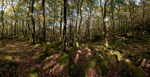 Wales wildlife: Ty Canol National Nature Reserve, Pemrokeshire, Wales