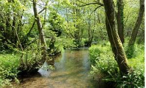 Stream at Kingcombe Meadows, Dorset