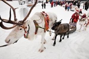 Sami Lapland: Sámi elder Per Kuhmunen's reindeer convoy