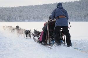 Sami Lapland: Reindeer sldge tour for tourists