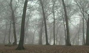 Hoia-Baciu forest: Cluj-Napoca, Romania