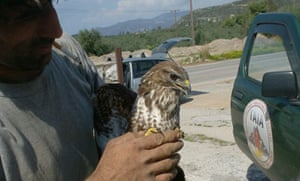 A Gaia volunteer with a rescued kestrel