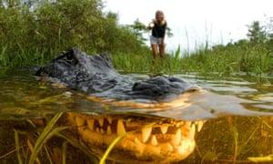 A Florida alligator in the Everglades