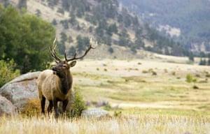 Wildlife watching in Estes Park
