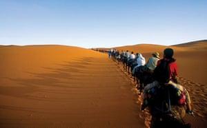 Camel safari, Sahara