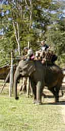 Andrew on an elephant
