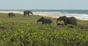 Gift of the Gabon | Travel | The Guardian
