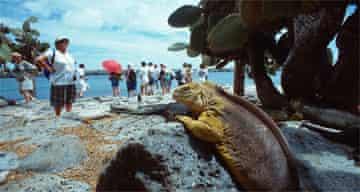 Iguana watches tourists,  Galapagos Islands