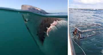 Shark diving, South Africa