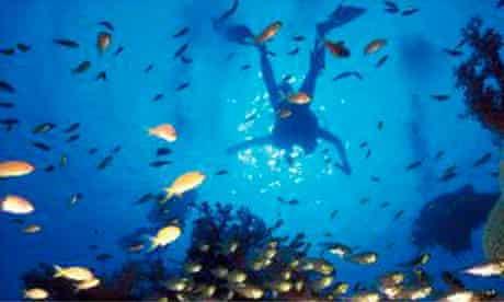 A diver off a coral reef