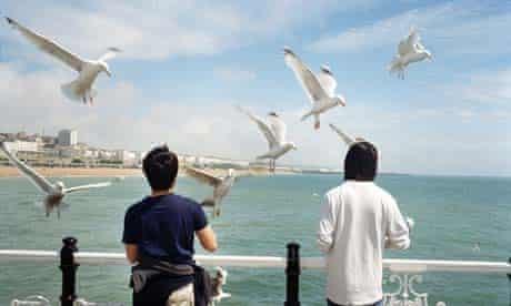 Welcome: Brighton seagulls