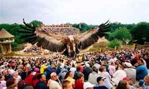 Falcon at Puy du Fou theme park, France