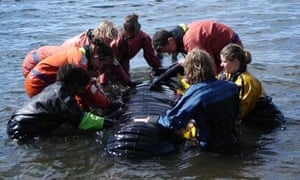 Volunteers learn how to rescue a giant inflatable whale in the Moray Firth
