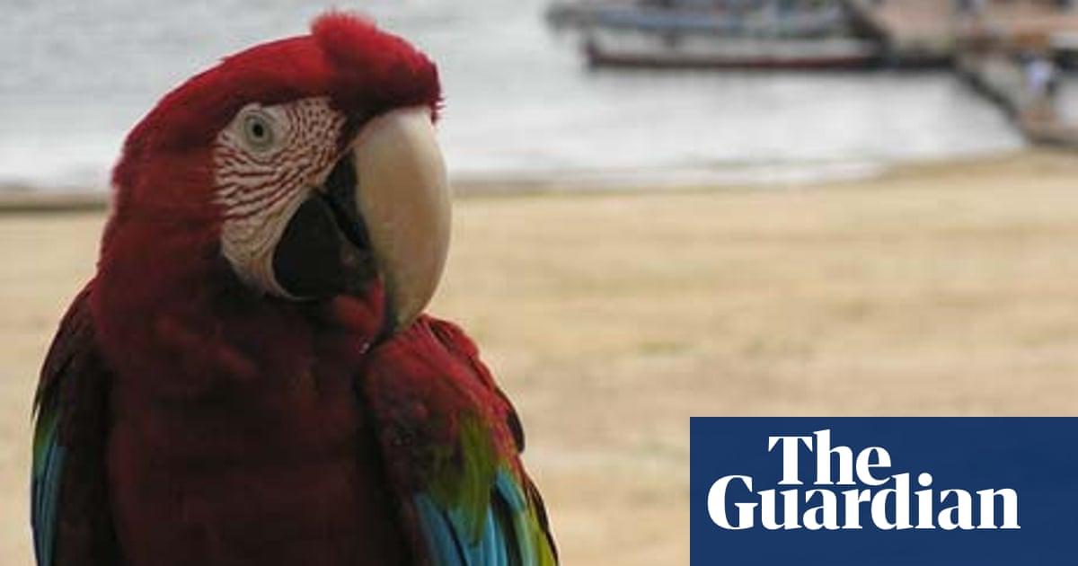 Tiwa Eco Resort, Brazil | Travel | The Guardian
