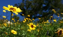 Topanga Canyon, LA: flowers