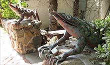 Topanga Canyon, LA: frogs