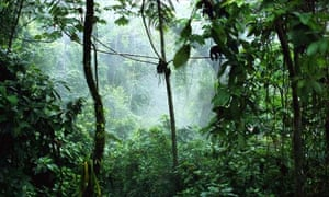 Jungle: trees in the rainforest