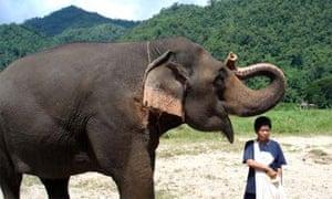Ten best volunteering wildlife holidays | Travel | The Guardian
