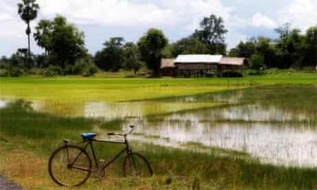 Paddy field in Laos