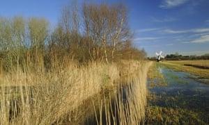 Wicken Fen, Wicken, Cambridgeshire, England, UK