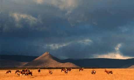 Blesbok herd on open Karoo landscape, South Africa