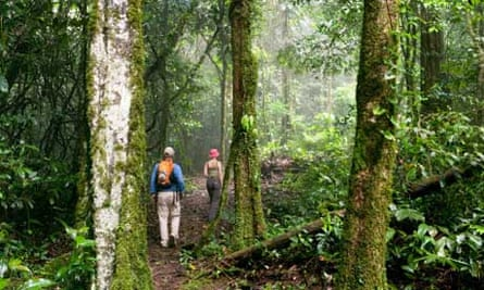 Tourists hiking in a forest in Suriname