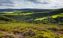 Heather and gorse in bloom, Exmoor National Park, England
