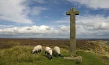 Sheep grazing near Young Ralphs Cross on the North York moors