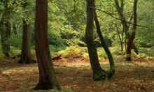Trees of the New Forest, Hampshire, England, UK