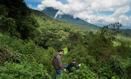 Gorilla tracking, Volcanoes National Park, Rwanda