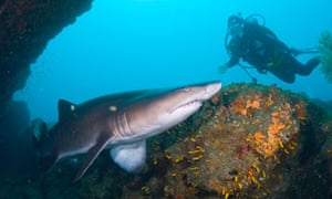 0ee402cff2f95 Kevin Rushby goes scuba-diving with sharks in the Indian Ocean south ...