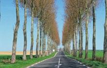 Trees line a straight rural road near Hesdin, Pas de Calais
