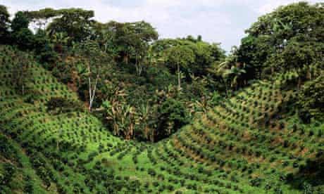Coffee plantation, near Armenia, Colombia