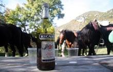 horse riding provence, pastis