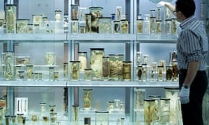 The Hunterian Museum, Royal College of Surgeons, Lincoln's Inn Fields, London