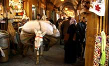 Donkeys can spend their whole lives in the souk.