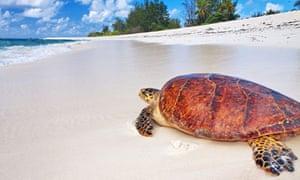 Bird Island Turtle Conservation, Seychelles