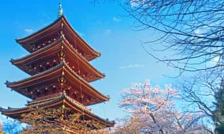Enjoy the cherry blossom in Japan this month.