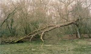Wayland wood