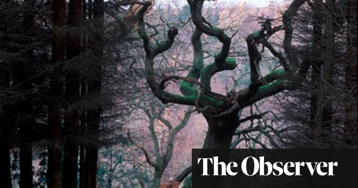 The 10 best woods and forests for myths and legends | Travel