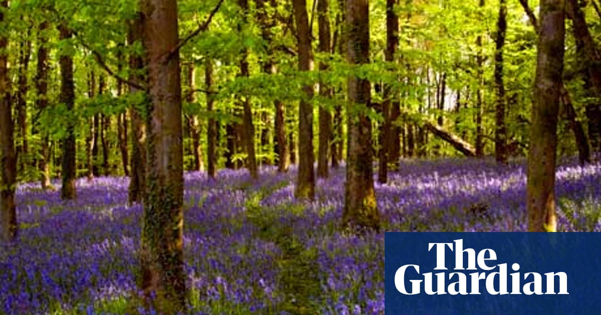 The 10 Best Woods And Forests For Spring Flowers Spring The Guardian