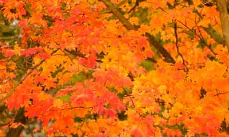 Bright red and orange autumn leaves