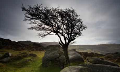 Blowing in the wind … Dartmoor can be a bleak and uninviting place