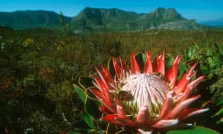 The fynbos on the Western Cape