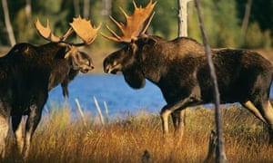 Bull Moose confrontation