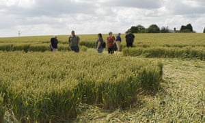 Dixe Wills's group explores a crop circle in Wiltshire