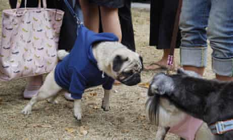 Pugs and Kisses fashion show for dogs