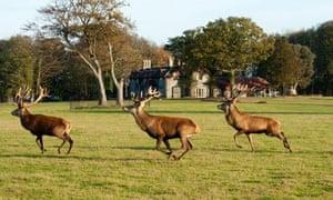 The Gunton Arms lies in a 1,000-acre deer park in Norfolk