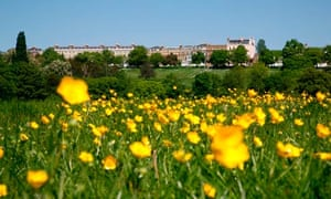 Buttercups in Petersham Meadows in front of Richmond Terrace, Richmond Hill